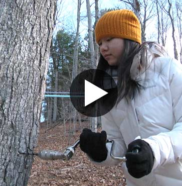 Tap A Tree with Tim